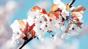 free-spring-wallpapers-in-hd-for-desktop-seasons-picture-spring-wallpaper